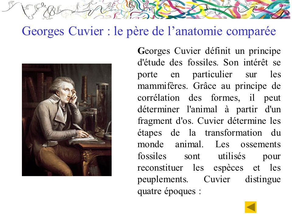Georges Cuvier définit un principe d'étude des fossiles. Son intérêt se porte en particulier sur les mammifères. Grâce au principe de corrélation des