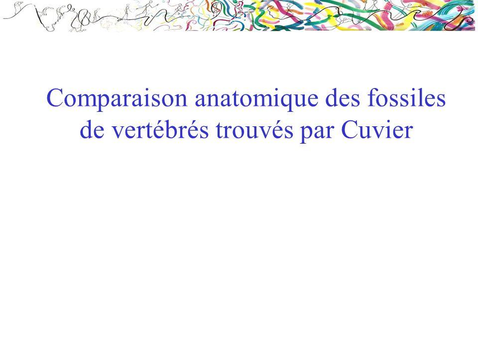 Comparaison anatomique des fossiles de vertébrés trouvés par Cuvier