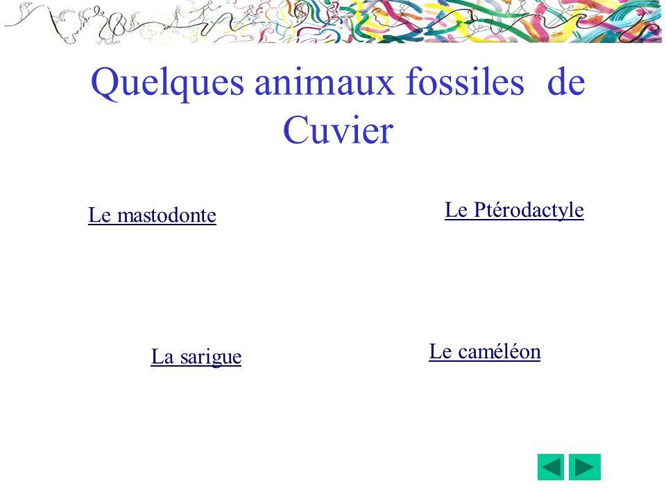 Le mastodonte Le Ptérodactyle La sarigue Le caméléon Quelques animaux fossiles de Cuvier