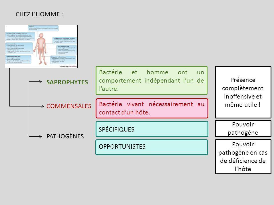 SPÉCIFIQUES OPPORTUNISTES COMMENSALES PATHOGÈNES SAPROPHYTES Bactérie et homme ont un comportement indépendant lun de lautre. Présence complètement in