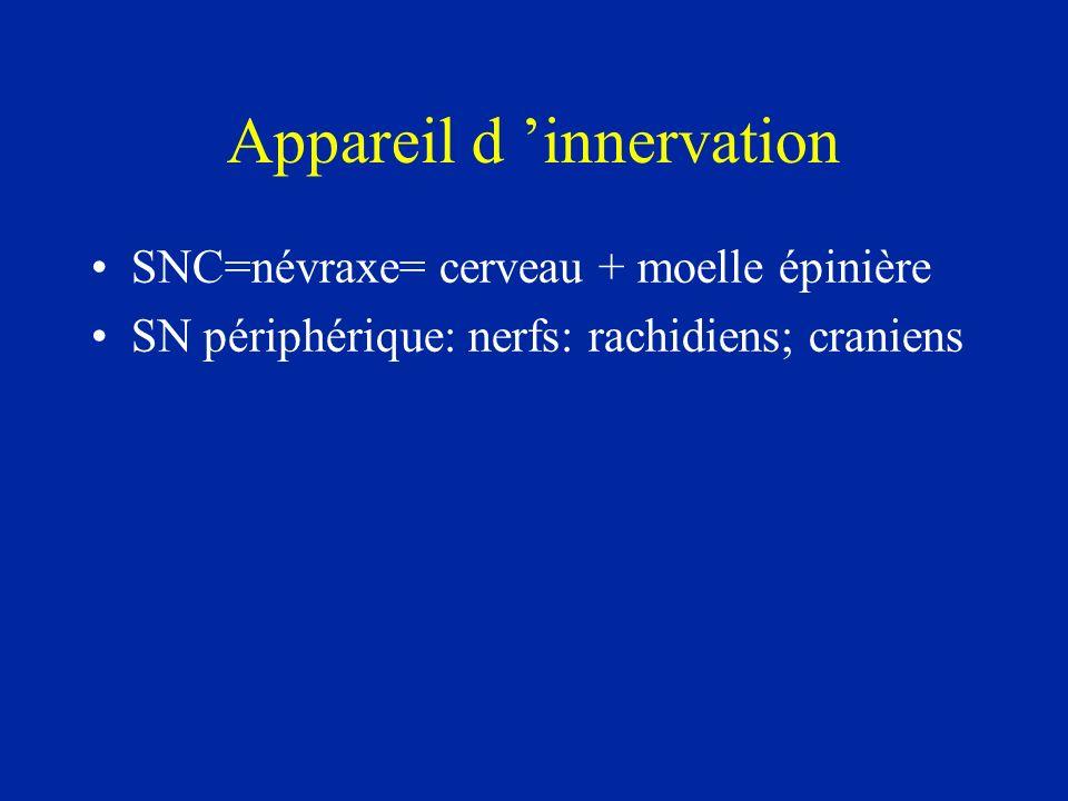 Appareil d innervation SNC=névraxe= cerveau + moelle épinière SN périphérique: nerfs: rachidiens; craniens