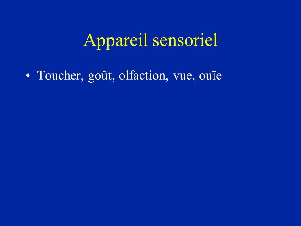 Appareil sensoriel Toucher, goût, olfaction, vue, ouïe