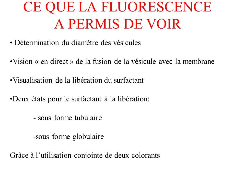 CE QUE LA FLUORESCENCE A PERMIS DE VOIR Détermination du diamètre des vésicules Vision « en direct » de la fusion de la vésicule avec la membrane Visu