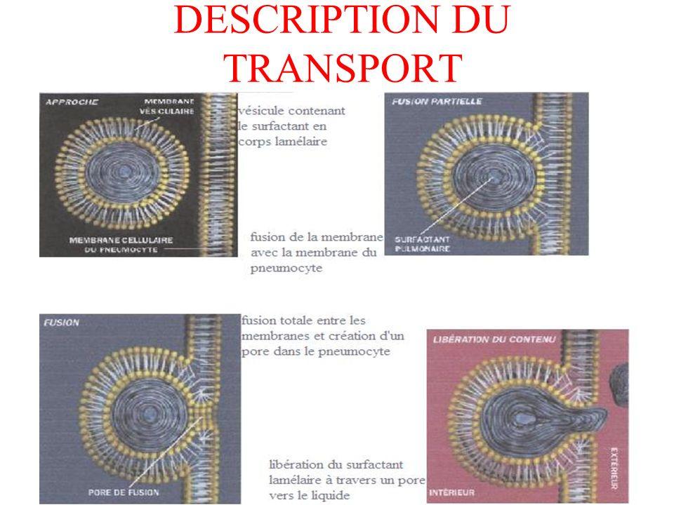DESCRIPTION DU TRANSPORT