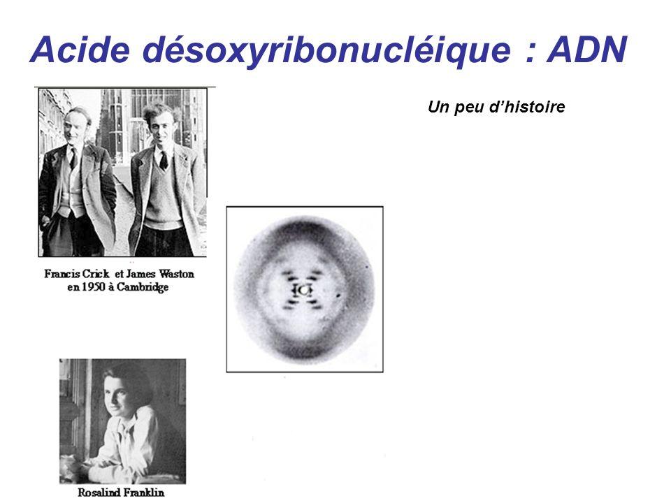 Acide désoxyribonucléique : ADN Un peu dhistoire