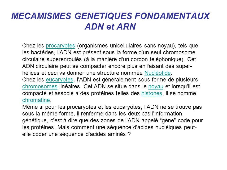 MECAMISMES GENETIQUES FONDAMENTAUX ADN et ARN Chez les procaryotes (organismes unicellulaires sans noyau), tels que les bactéries, lADN est présent so