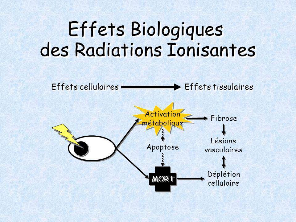 Effets Biologiques des Radiations Ionisantes Effets cellulaires Effets tissulaires Activation métabolique MORT Apoptose Déplétion cellulaire Fibrose Lésions vasculaires
