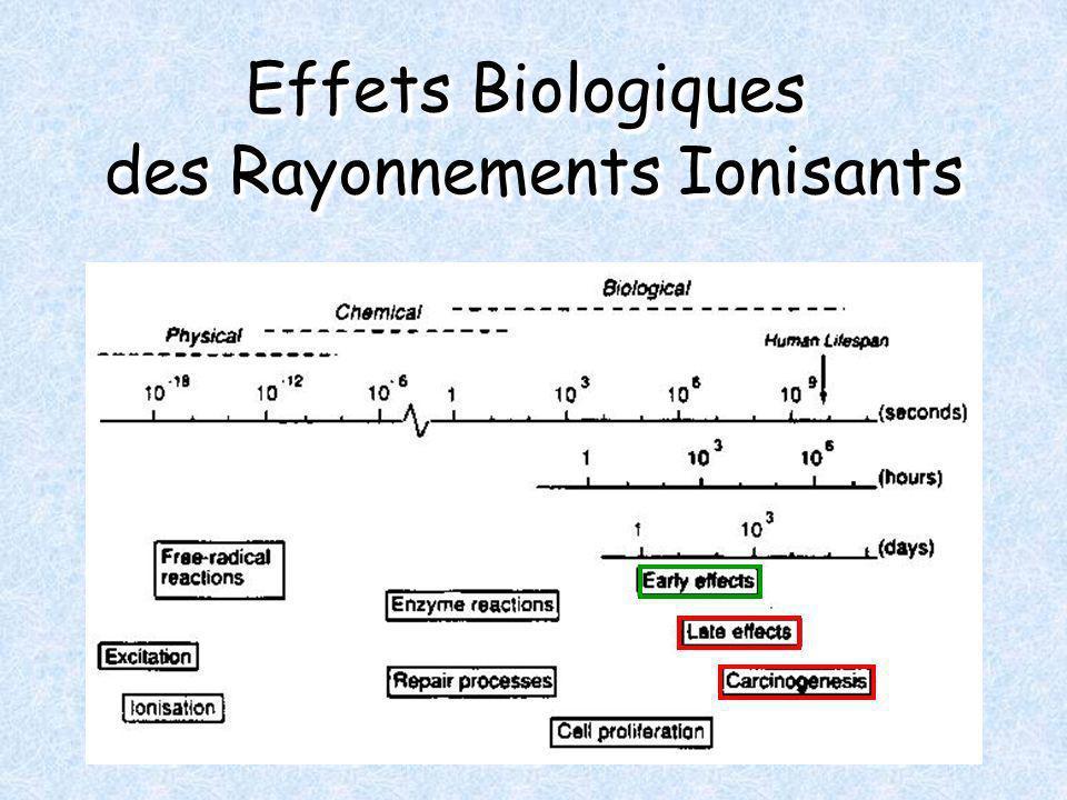 Effets Biologiques des Rayonnements Ionisants