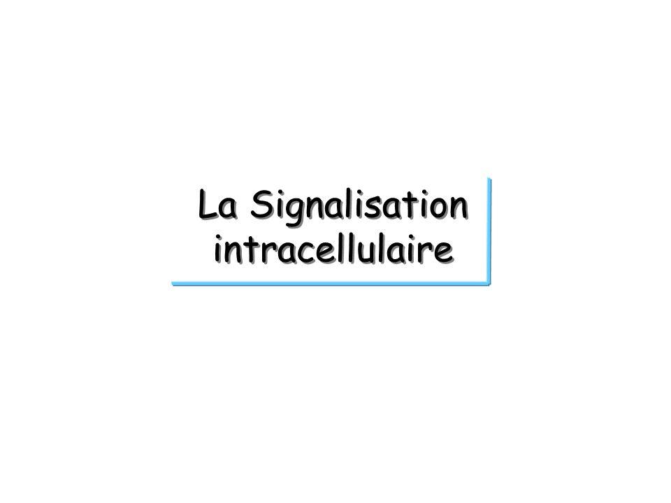 La Signalisation intracellulaire