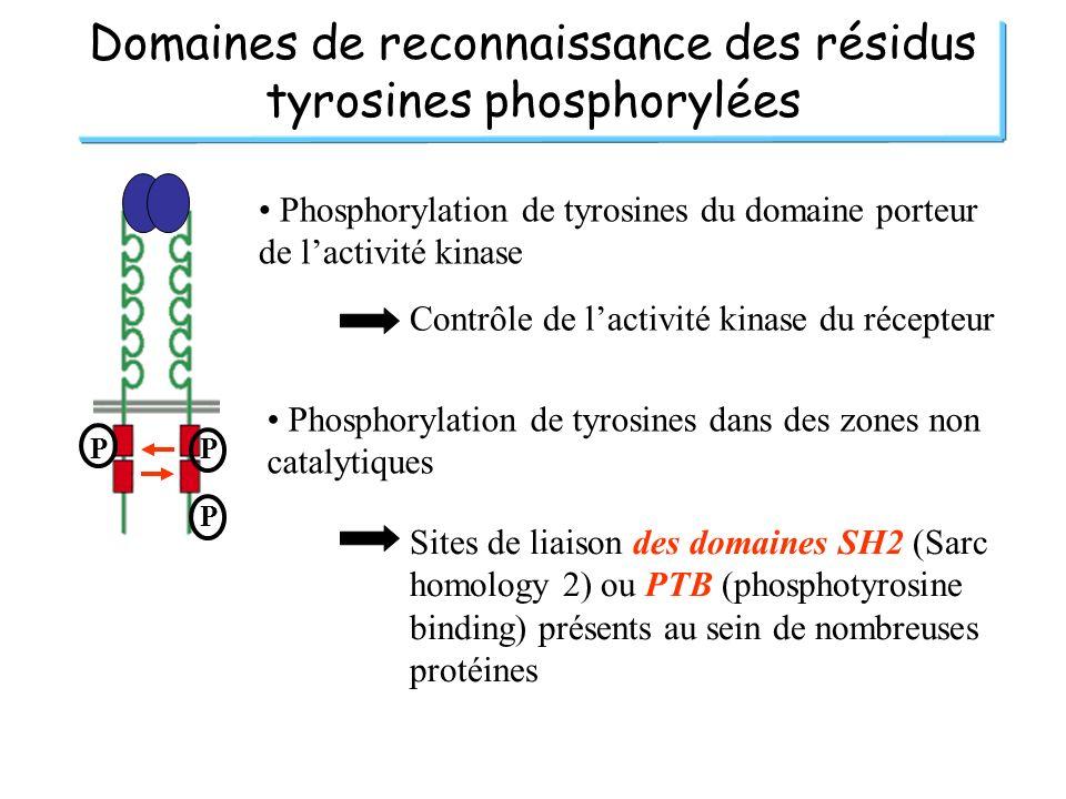 Domaines de reconnaissance des résidus tyrosines phosphorylées PP P Phosphorylation de tyrosines du domaine porteur de lactivité kinase Contrôle de la