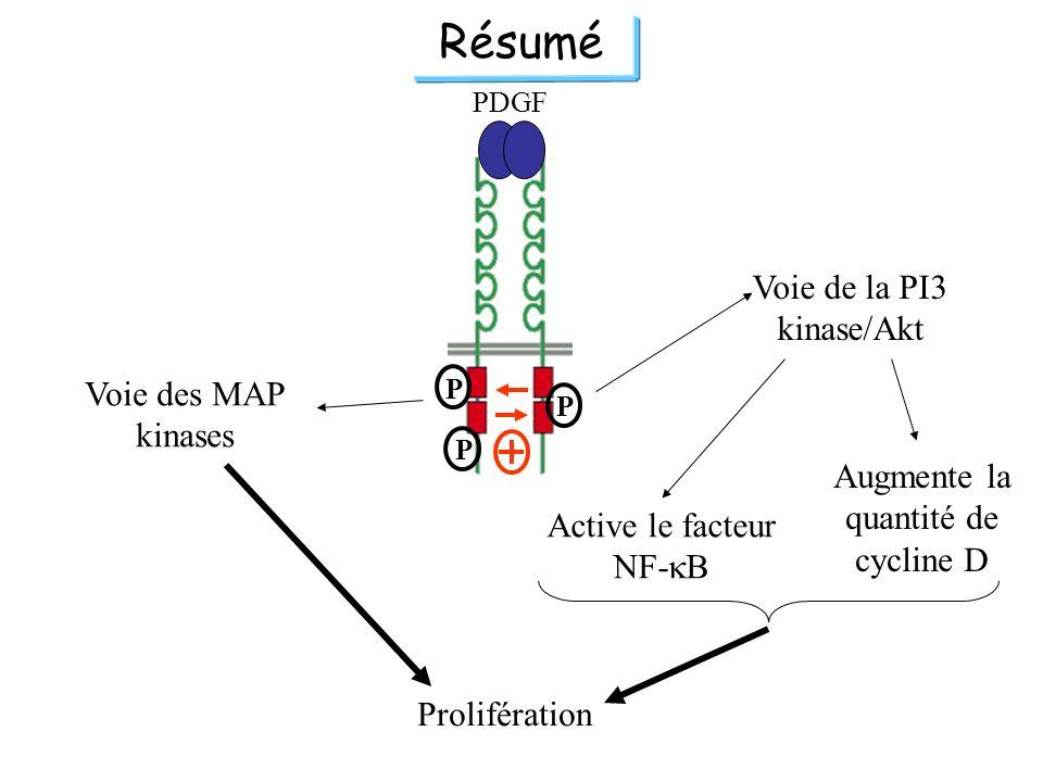 PDGF P P P Voie des MAP kinases Voie de la PI3 kinase/Akt Prolifération Résumé Augmente la quantité de cycline D Active le facteur NF- B