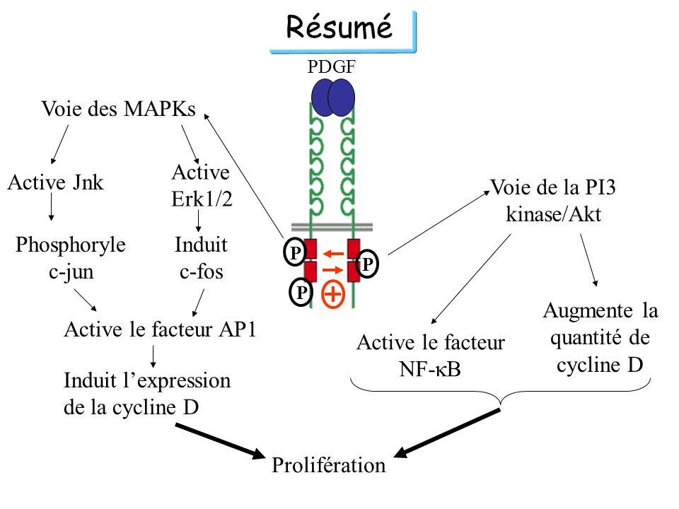 PDGF P P P Voie de la PI3 kinase/Akt Prolifération Augmente la quantité de cycline D Active le facteur NF- B Résumé Active le facteur AP1 Induit lexpr