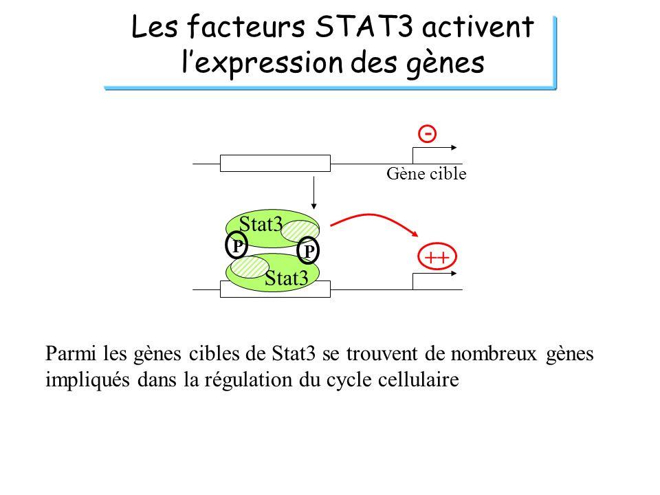 Les facteurs STAT3 activent lexpression des gènes Gène cible - ++ P P Stat3 Parmi les gènes cibles de Stat3 se trouvent de nombreux gènes impliqués da