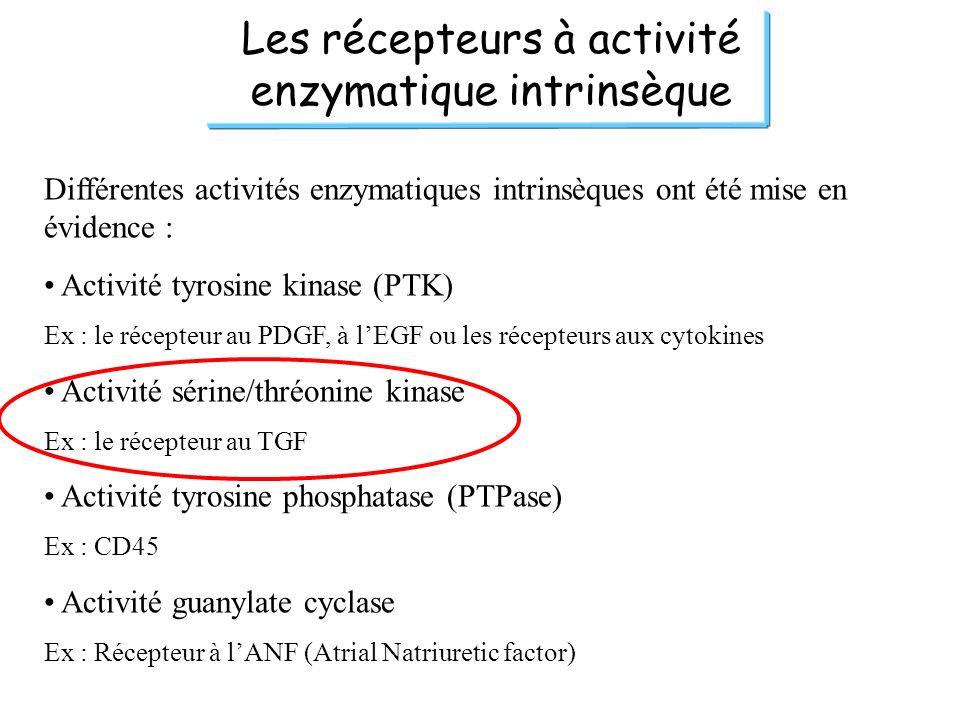 Les récepteurs à activité enzymatique intrinsèque Différentes activités enzymatiques intrinsèques ont été mise en évidence : Activité tyrosine kinase