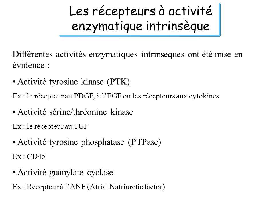 Les récepteurs à activité enzymatique intrinsèque Différentes activités enzymatiques intrinsèques ont été mise en évidence : Activité tyrosine kinase (PTK) Ex : le récepteur au PDGF, à lEGF ou les récepteurs aux cytokines Activité sérine/thréonine kinase Ex : le récepteur au TGF Activité tyrosine phosphatase (PTPase) Ex : CD45 Activité guanylate cyclase Ex : Récepteur à lANF (Atrial Natriuretic factor)