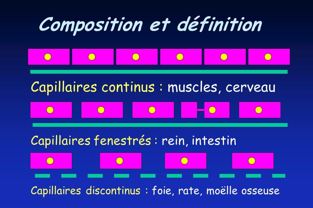 Composition et définition Capillaires continus : muscles, cerveau Capillaires fenestrés : rein, intestin Capillaires discontinus : foie, rate, moëlle osseuse