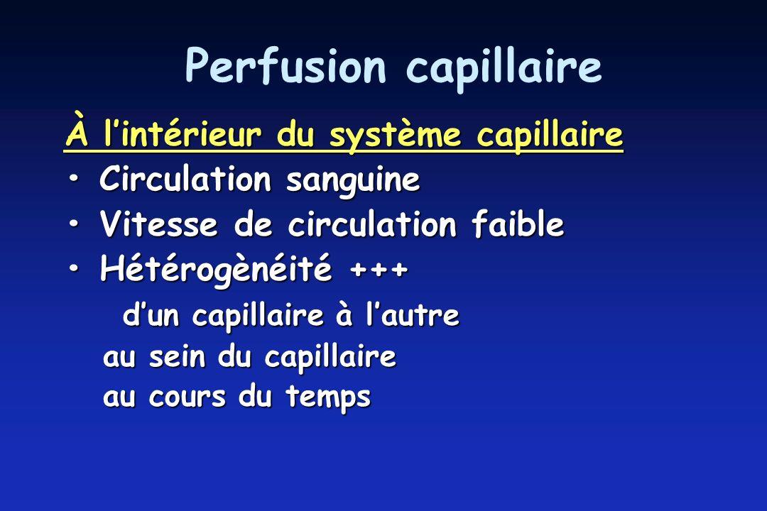 Perfusion capillaire À lintérieur du système capillaire Circulation sanguine Circulation sanguine Vitesse de circulation faible Vitesse de circulation faible Hétérogènéité +++ Hétérogènéité +++ dun capillaire à lautre dun capillaire à lautre au sein du capillaire au sein du capillaire au cours du temps au cours du temps