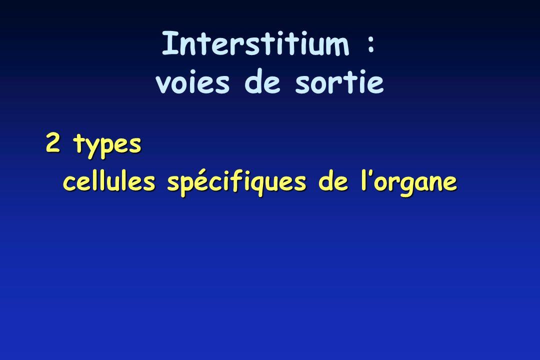 Interstitium : voies de sortie 2 types cellules spécifiques de lorgane