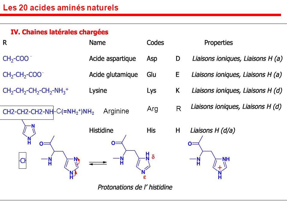 Arg R Les 20 acides aminés naturels - - Arginine-C (=NH 2 + )NH 2