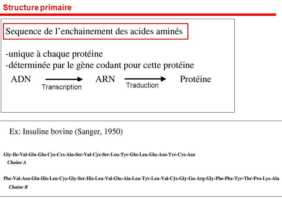 Structure primaire Traduction Transcription