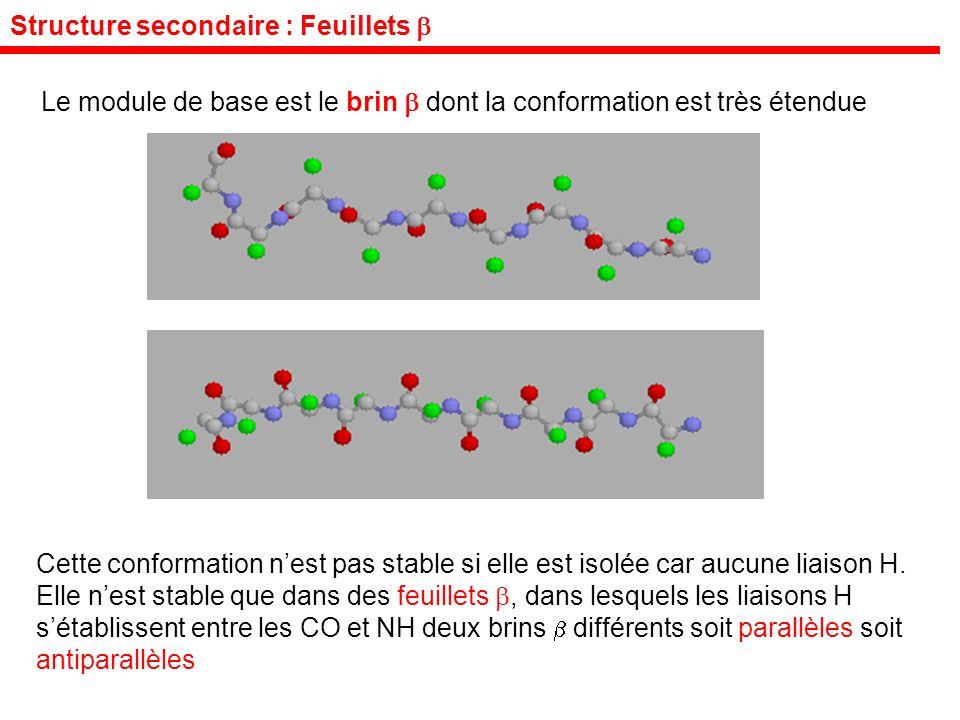 Structure secondaire : Feuillets Le module de base est le brin dont la conformation est très étendue Cette conformation nest pas stable si elle est isolée car aucune liaison H.