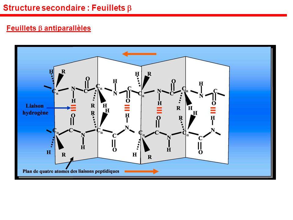 Structure secondaire : Feuillets Feuillets antiparallèles
