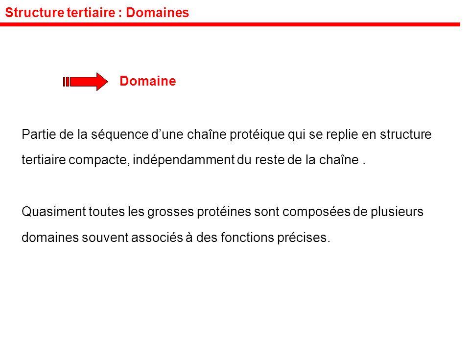 Structure tertiaire : Domaines Domaine Partie de la séquence dune chaîne protéique qui se replie en structure tertiaire compacte, indépendamment du reste de la chaîne.