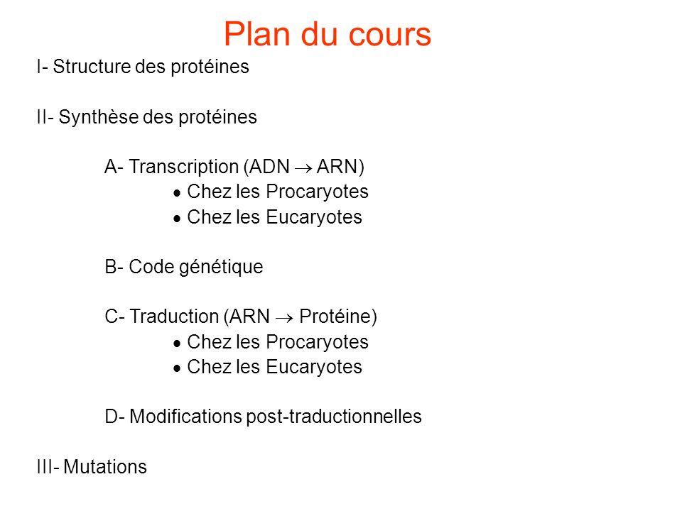 Plan du cours I- Structure des protéines II- Synthèse des protéines A- Transcription (ADN ARN) Chez les Procaryotes Chez les Eucaryotes B- Code génétique C- Traduction (ARN Protéine) Chez les Procaryotes Chez les Eucaryotes D- Modifications post-traductionnelles III- Mutations