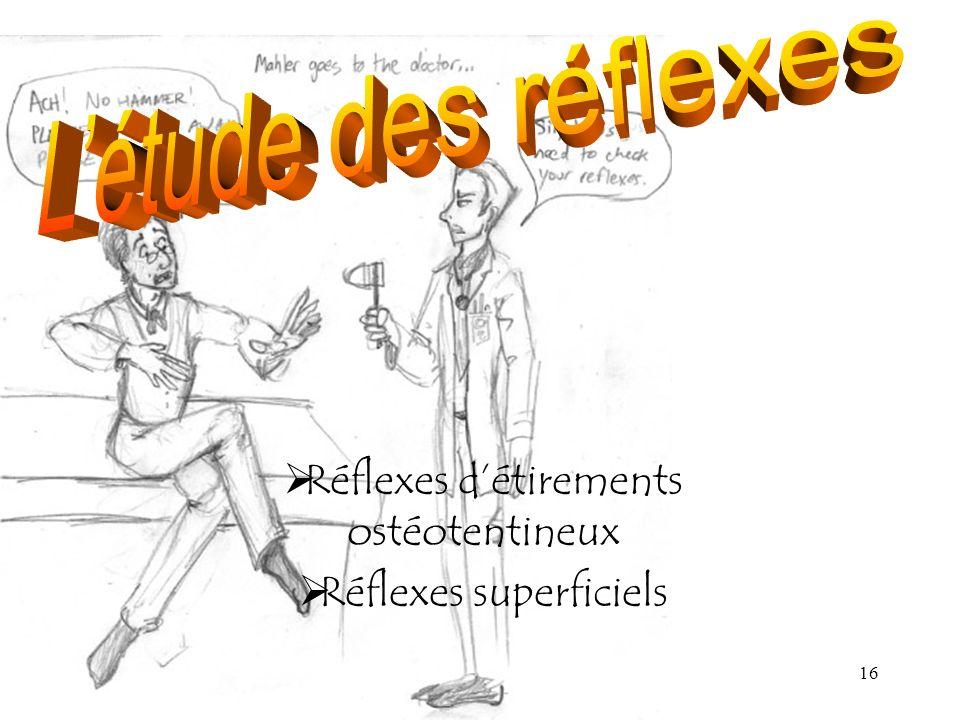 16 Réflexes détirements ostéotentineux Réflexes superficiels