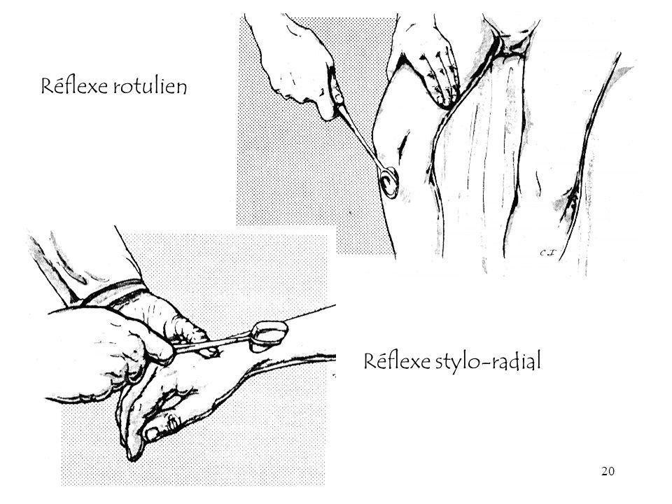 20 Réflexe stylo-radial Réflexe rotulien