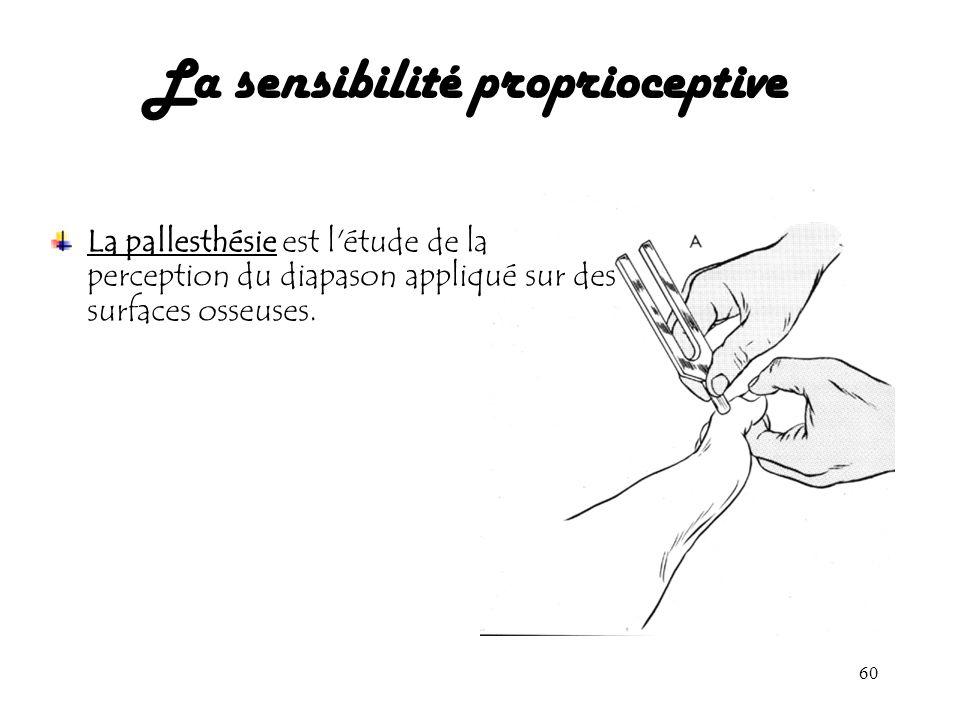 60 La sensibilité proprioceptive La pallesthésie est l'étude de la perception du diapason appliqué sur des surfaces osseuses.