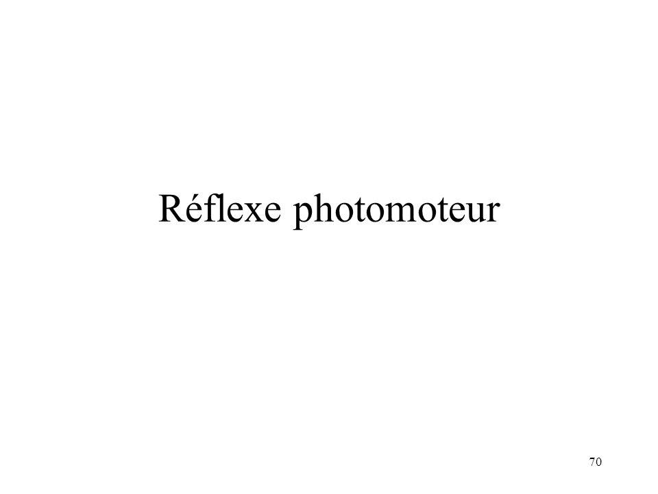 70 Réflexe photomoteur