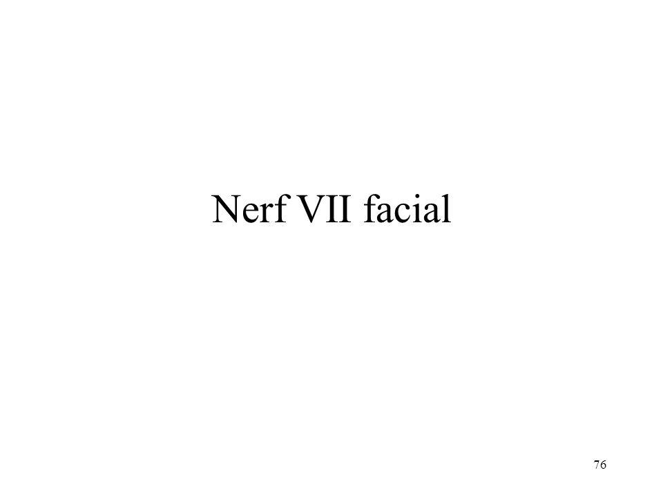 76 Nerf VII facial