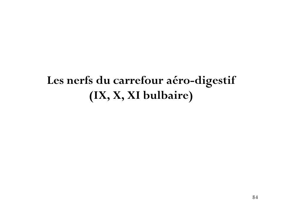 84 Les nerfs du carrefour aéro-digestif (IX, X, XI bulbaire)