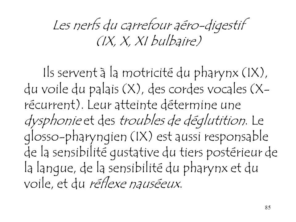 85 Les nerfs du carrefour aéro-digestif (IX, X, XI bulbaire) Ils servent à la motricité du pharynx (IX), du voile du palais (X), des cordes vocales (X