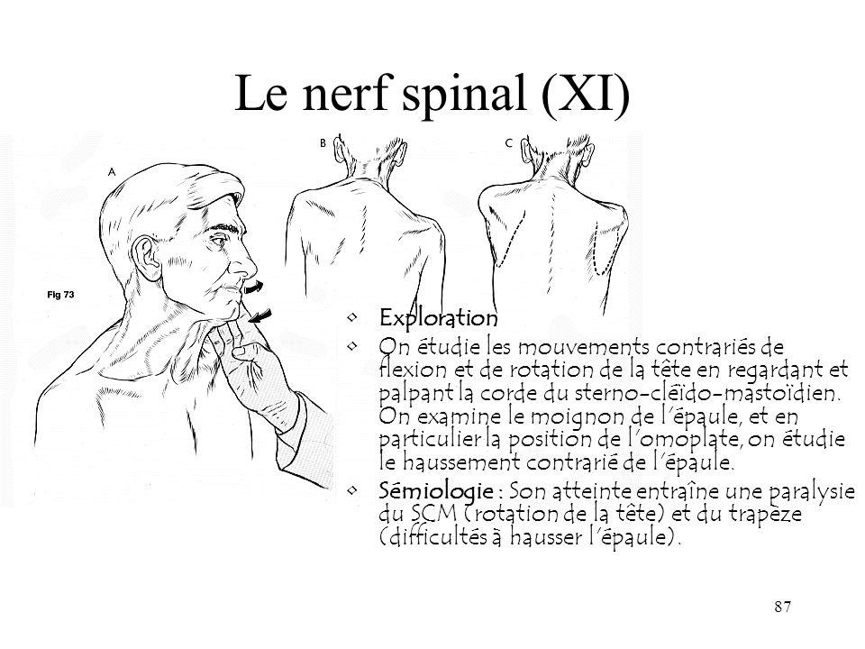 87 Le nerf spinal (XI) Exploration On étudie les mouvements contrariés de flexion et de rotation de la tête en regardant et palpant la corde du sterno
