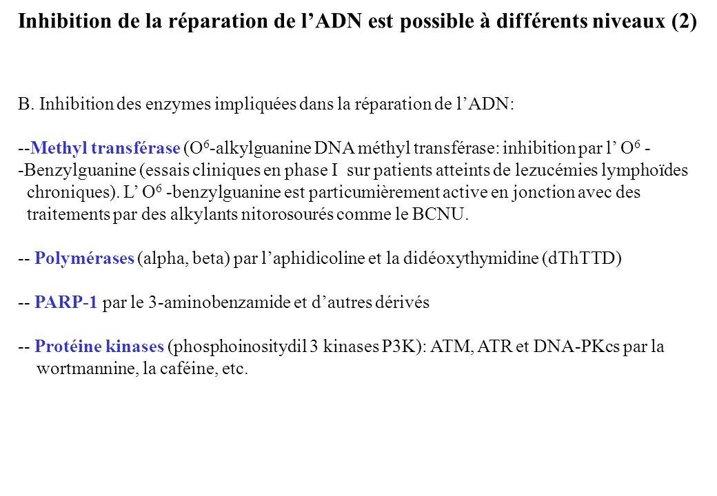 Inhibition de la réparation de lADN est possible à différents niveaux (2) B. Inhibition des enzymes impliquées dans la réparation de lADN: --Methyl tr