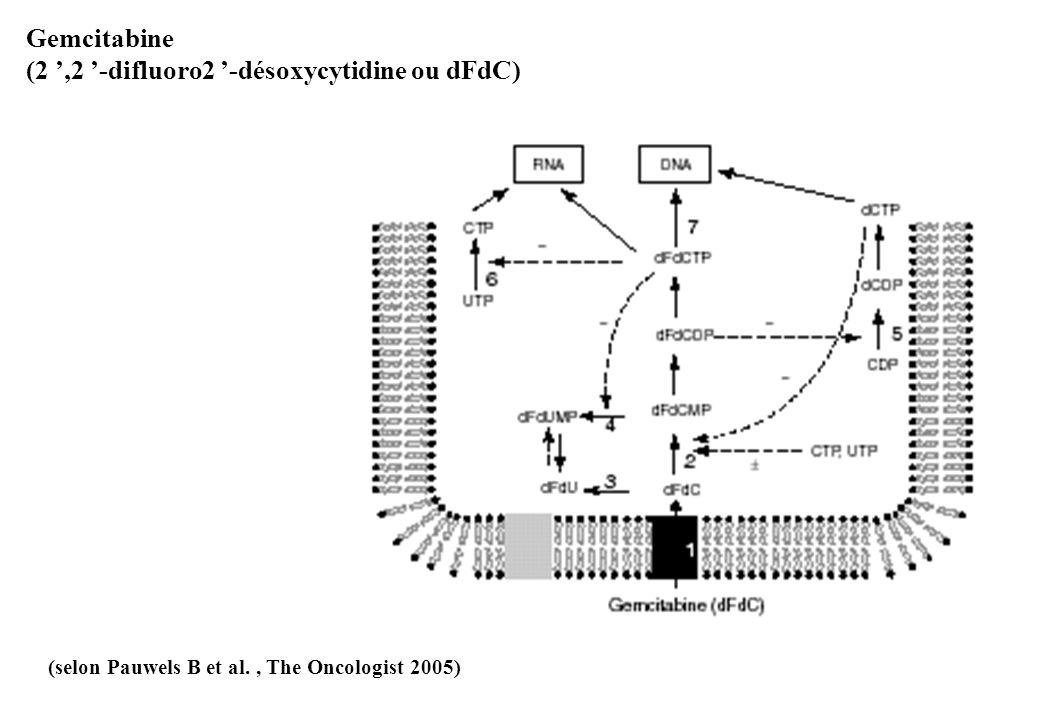 Gemcitabine (2,2 -difluoro2 -désoxycytidine ou dFdC) (selon Pauwels B et al., The Oncologist 2005)