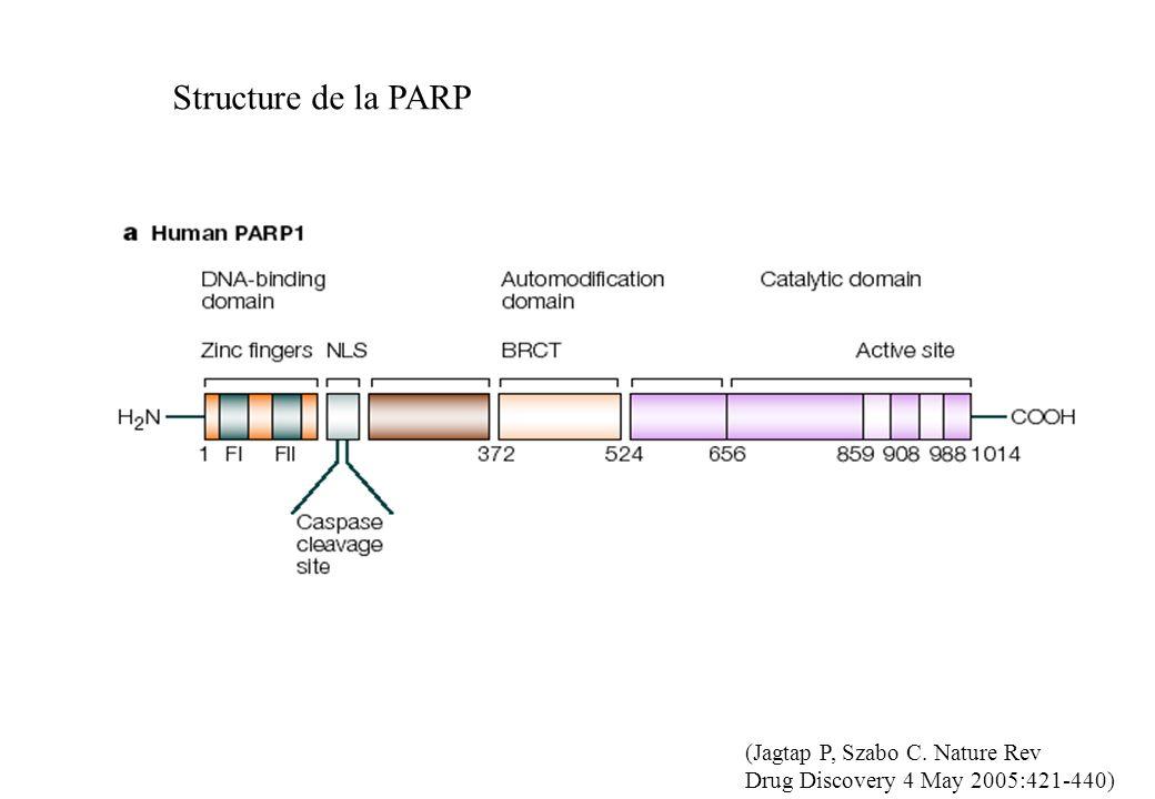 Structure de la PARP (Jagtap P, Szabo C. Nature Rev Drug Discovery 4 May 2005:421-440)
