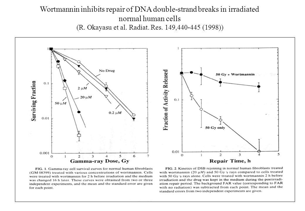 Wortmannin inhibits repair of DNA double-strand breaks in irradiated normal human cells (R. Okayasu et al. Radiat. Res. 149,440-445 (1998))
