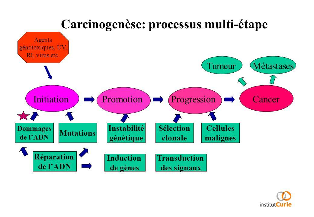 Carcinogenèse: processus multi-étape InitiationPromotionProgressionCancer TumeurMétastases Agents génotoxiques, UV, RI, virus etc. Dommages de lADN Mu