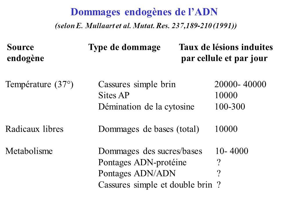 Dommages endogènes de lADN (selon E. Mullaart et al. Mutat. Res. 237,189-210 (1991)) SourceType de dommage Taux de lésions induites endogènepar cellul
