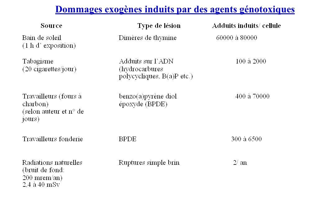 Dommages exogènes induits par des agents génotoxiques