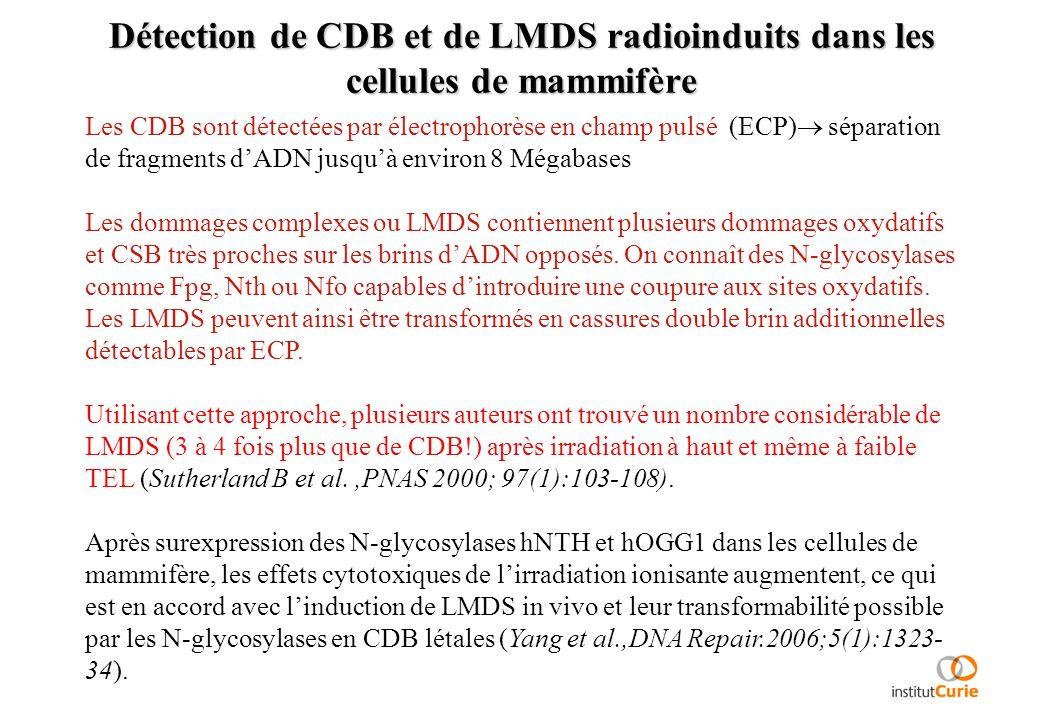 Détection de CDB et de LMDS radioinduits dans les cellules de mammifère Les CDB sont détectées par électrophorèse en champ pulsé (ECP) séparation de f