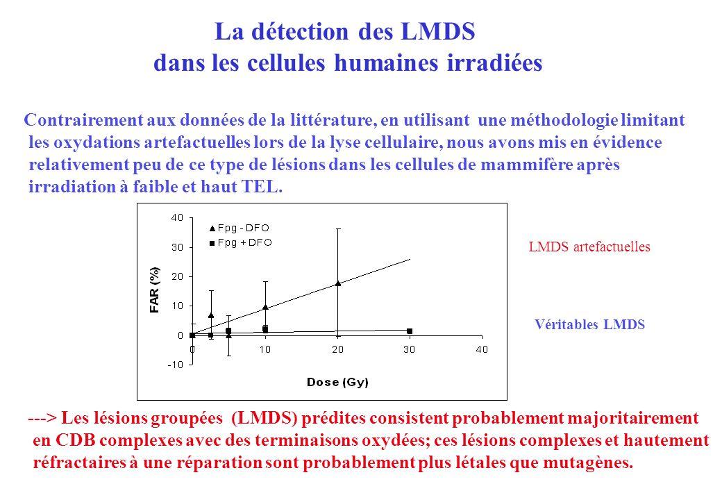 La détection des LMDS dans les cellules humaines irradiées Contrairement aux données de la littérature, en utilisant une méthodologie limitant les oxy