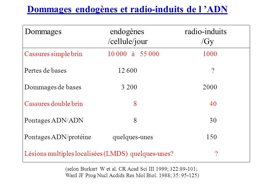 Dommages endogènes et radio-induits de l ADN Dommages endogènes radio-induits /cellule/jour /Gy Cassures simple brin10 000 à 55 000 1000 Pertes de bas