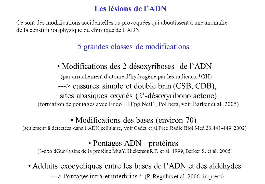 Les lésions de lADN Ce sont des modifications accidentelles ou provoquées qui aboutissent à une anomalie de la constitution physique ou chimique de lA