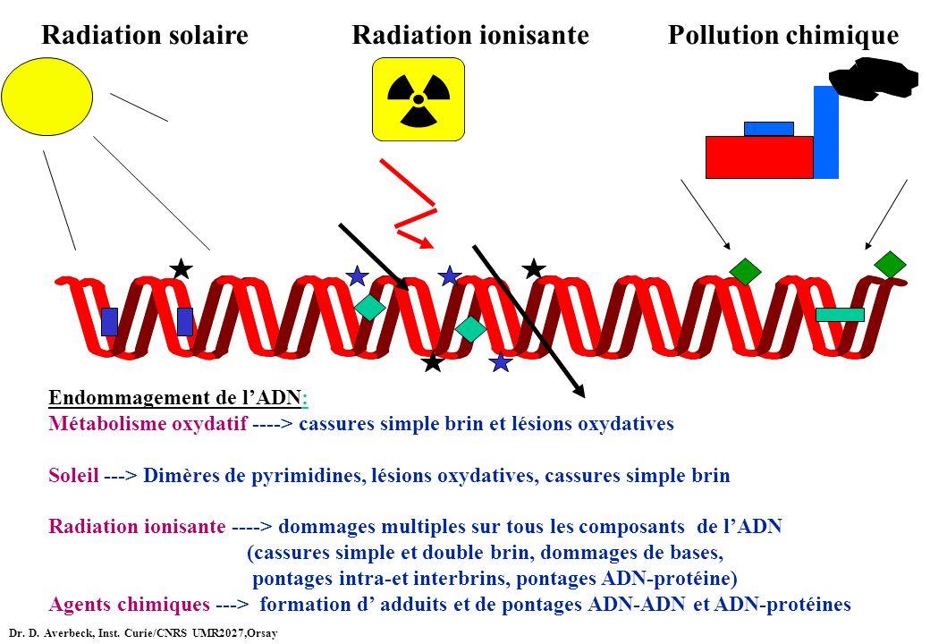 Radiation solaireRadiation ionisantePollution chimique Endommagement de lADN: Métabolisme oxydatif ----> cassures simple brin et lésions oxydatives So