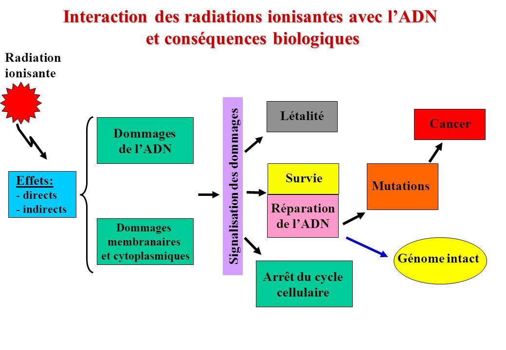 Interaction des radiations ionisantes avec lADN et conséquences biologiques Radiation ionisante Effets: - directs - indirects Réparation de lADN Létal