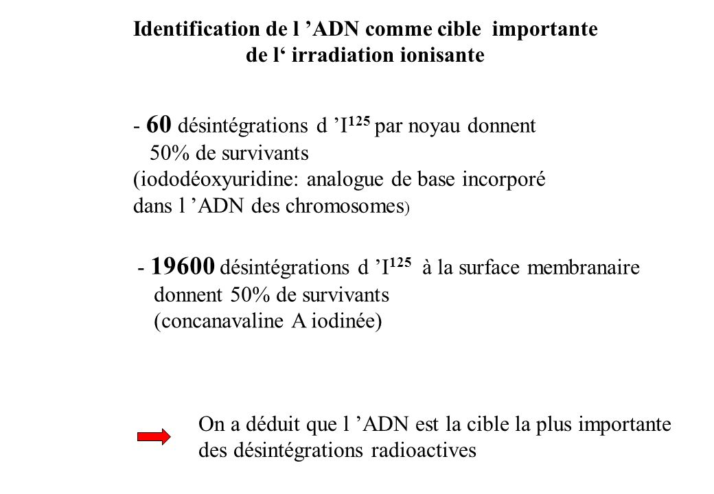 Induction de CDB radioinduites par la phosphorylation de lhistone H2AX (Rothkamm et Löbrich, PNAS 2003;100:5057-5062)